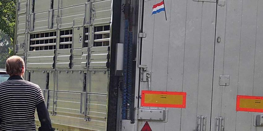 NVWA controleert strenger op veevervoer tijdens hitte