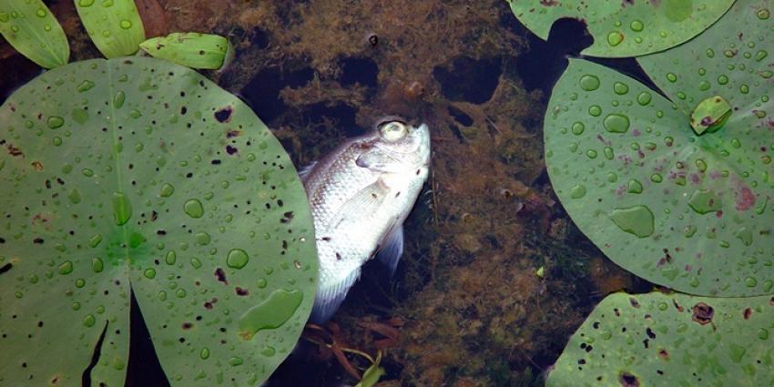 Foto van dode vis | Sxc