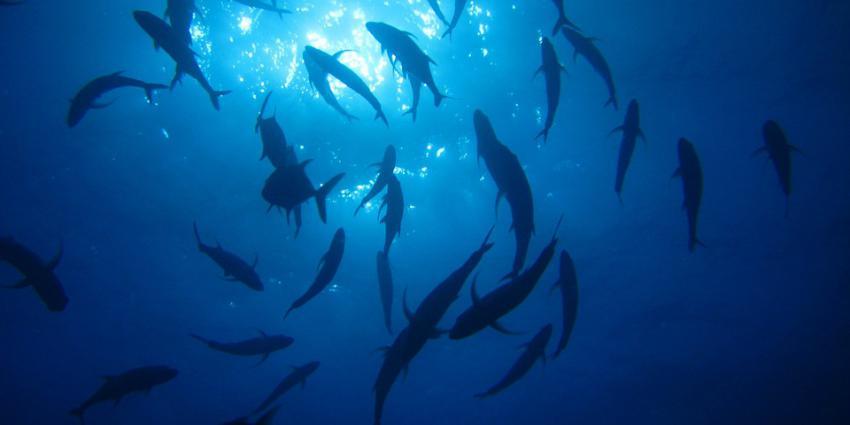 Vissen in het water