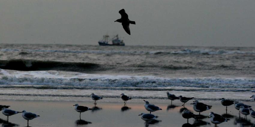 vissersboot-meeuwen-zee
