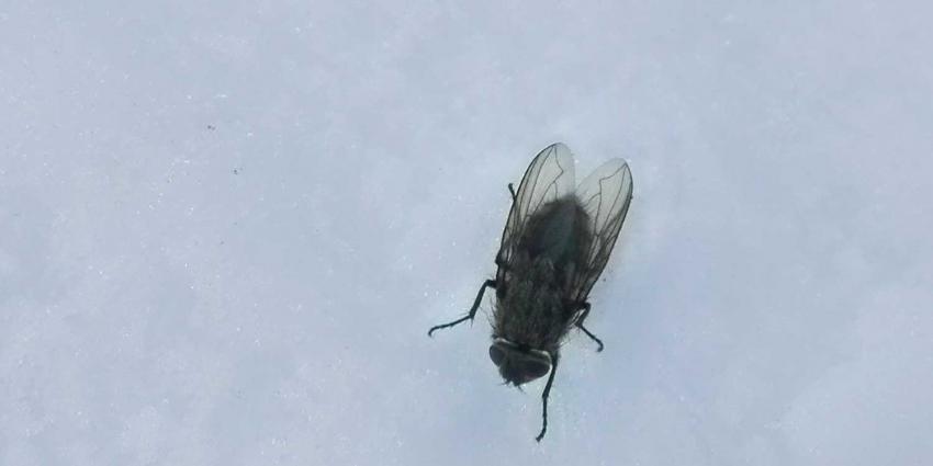 vlieg-sneeuw-winter