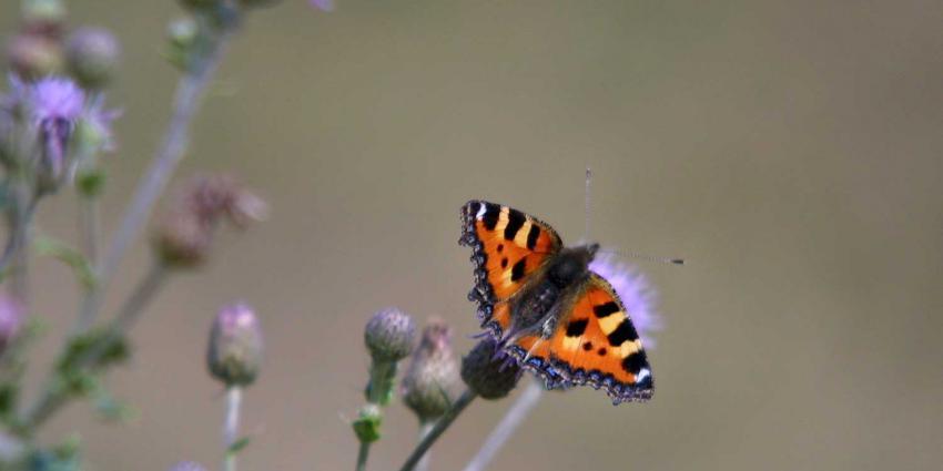 vlinder-bloem-natuur