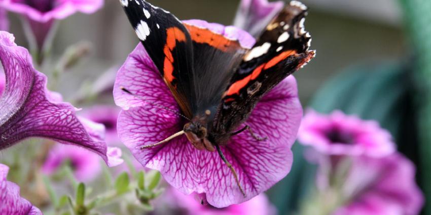 Tropische vlinders uit Burgers' Zoo ontsnapt
