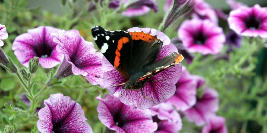 Duits-Nederlands onderzoek: massale afname insecten