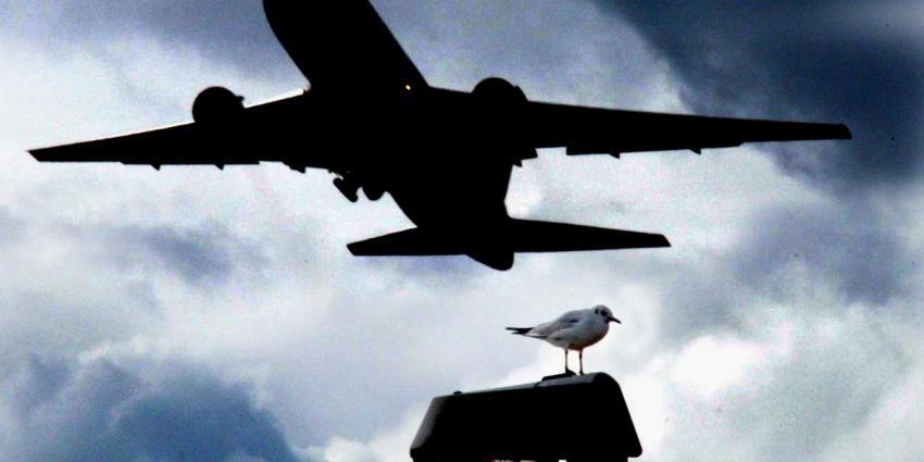 Meer vliegtuigen botsen met vogels op Schiphol