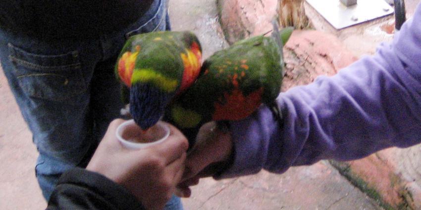 Stop vogelmarkten, in het belang van dierenwelzijn en de volksgezondheid