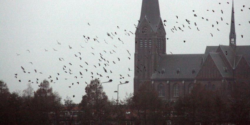 'Klimaatverandering: in april leggen alle vogels een ei?'