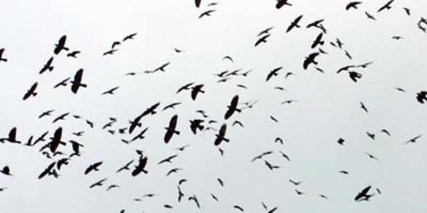 Foto van vogels | Archief EHF