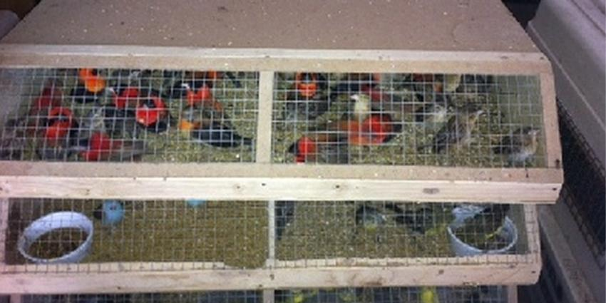 Foto van exotische vogels in kooi | KMar
