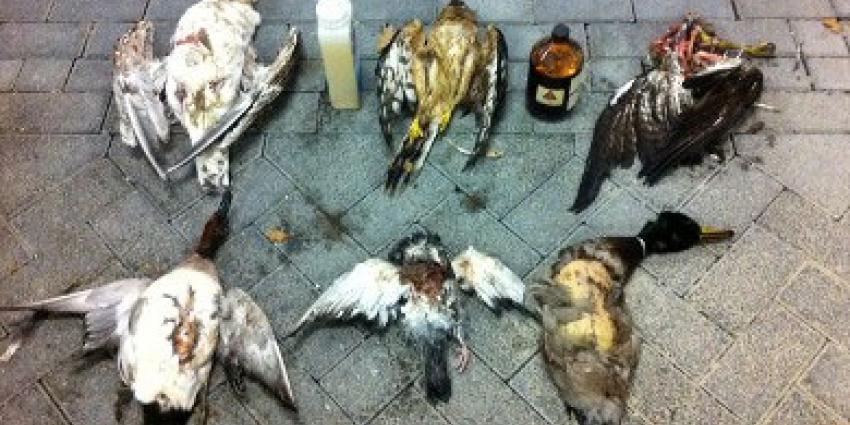 Jager opgepakt in onderzoek naar roofvogelvergiftiging