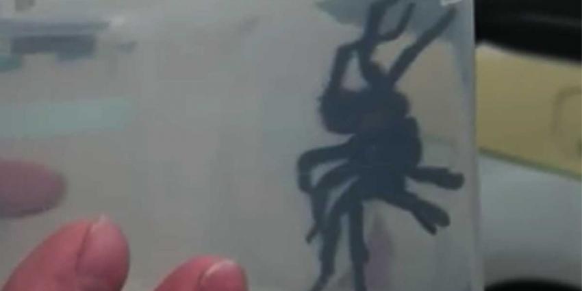 Finse hotelgast schrikt zich rot bij zien van vogelspin in badkamer