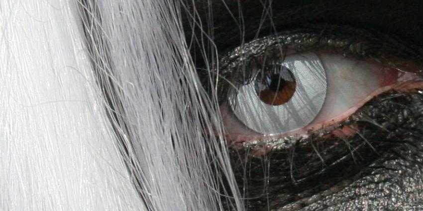Stadje in Nieuw-Zeeland gaat gebukt onder vampiers