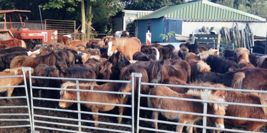 Foto verwaarloosde pony's en paarden | Politie