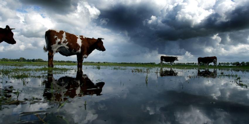 Dure verzekeringen door extreme regenval