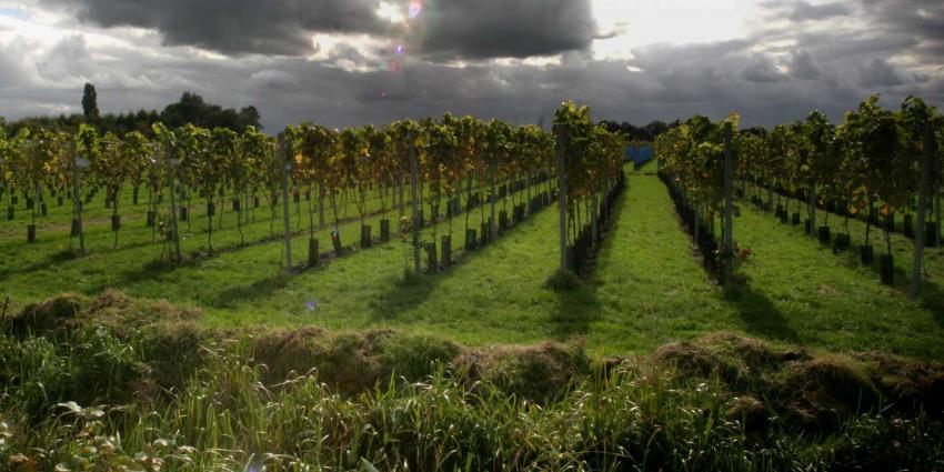 Maasvallei Limburg wijn krijgt BOB-vermelding