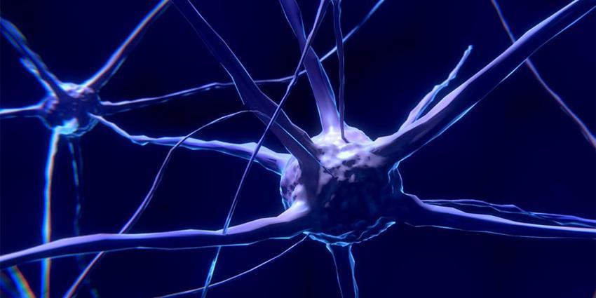 zenuwstelsel-hersenen