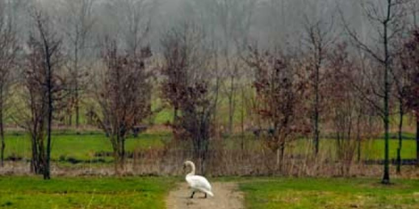Man gearresteerd voor dumpen asbest in bosperceel