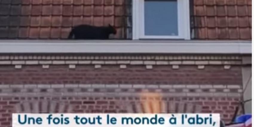 zwarte panter, dak, appartementen, frankrijk,