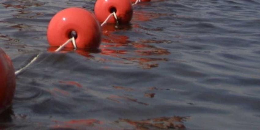 Sharon van Rouwendaal haalt goud op de 10 kilometer open water