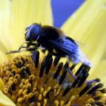 foto van de bijenkorf | fbf