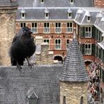 Binnenhof krijgt slagboom