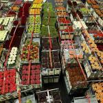 FNV: Aalten en Oude IJsselstreek houden tonnen achter voor bloemenvouwers