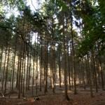Foto van bomen in bos | Archief EHF