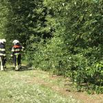 Vandalen stichten brand in bossage nabij Maastrichtsestraat in Boxtel