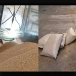 cocaine-container-bagasse-veevoer