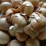 foto van eieren | fbf