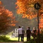 Herfstvakantie wordt in eigen land door 700.000 Nederlanders gehouden