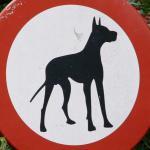 Hond op geheime locatie na mishandeling door baasje