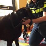 autodiefstal hond