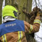 kat-boom-brandweer