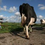 Utrecht stelt 0,45 miljoen euro beschikbaar voor jonge boeren