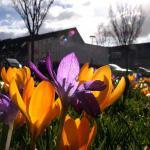krokus-lente-zon-fietser-sporten