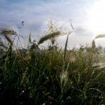 natuur-gras-dauw