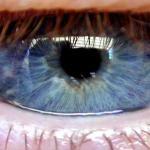Foto van oog iris pupil wimper   Archief EHF