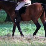 paard-zadel-bos