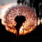 Droge ogen voorkomen in het hooikoortsseizoen