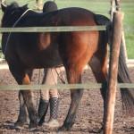 Paard in Drentse Eext mishandeld met scherp voorwerp