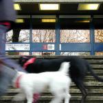 pieter-baan-hond