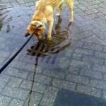 Foto van regenval put hond overstroming | Archief EHF
