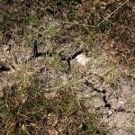 Spoedreparatie dijk bij Reeuwijk vanwege droogte