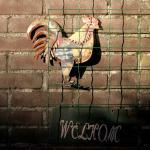 Nu ook vogelgriep in Overijssel geconstateerd