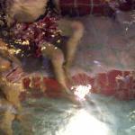 Schimmels hebben in zwembaden 'vrij spel'