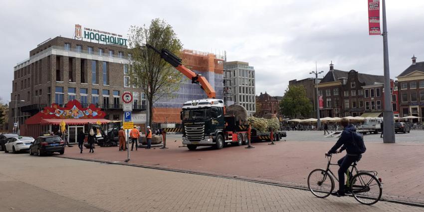Plaatsing van de eerste proefbomen op de Grote Markt