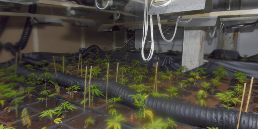 Foto van wietplantage in kelder | Aneo Koning | www.fotokoning.nl