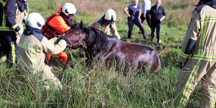 Brandweer trekt paard uit de sloot