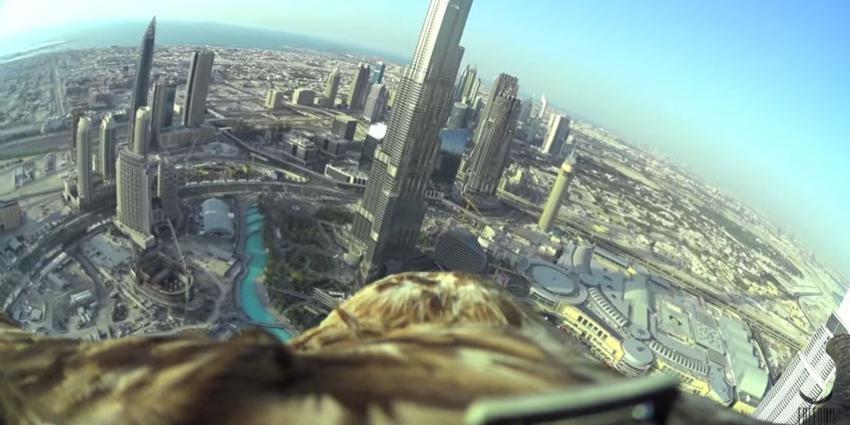 Kijk mee vanaf de rug van een adelaar tijdens een duikvlucht boven Dubai